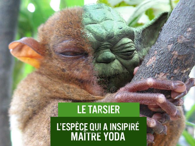 push_blog_saiga_tarsiers