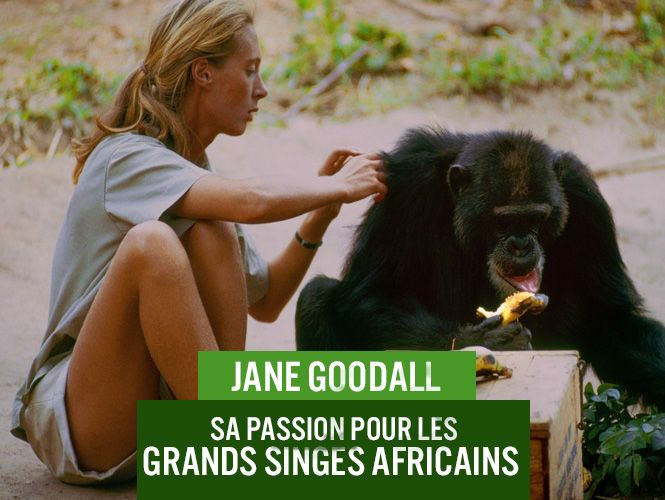 push_blog_saiga_jane_goodall