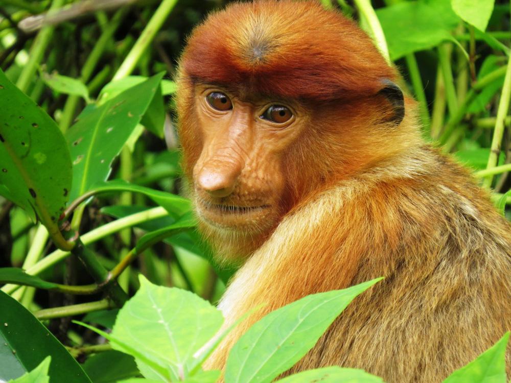 1120_0019_orangutan-project.jpg