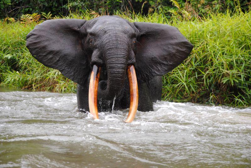 ▻ Voyage nature au Cameroun : gorilles et peuples de la réserve ...