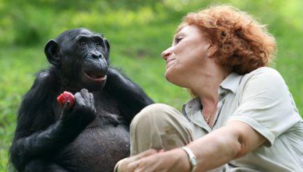 super populaire c9d37 f1df8 ▻ Voyage nature au Congo : préservation des bonobos avec l ...