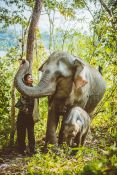 1254_0007_elephant-conservation-center