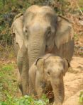 1254_0010_elephant-conservation-center