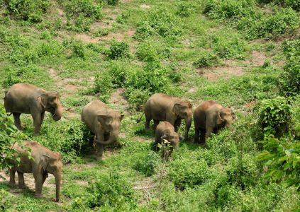 1254_0014_elephant-conservation-center